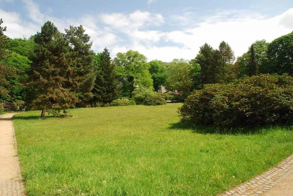 Rhododendronpark Dresden Wachwitz